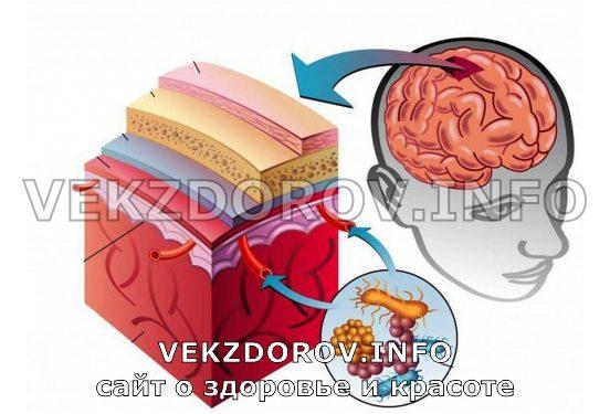 область поражения менингита
