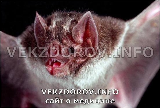 Симптомы бешенства у человека после укуса кота когда проявляется
