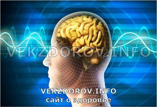 рабочая нервная система человека