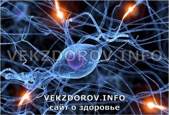 вид нервной системы