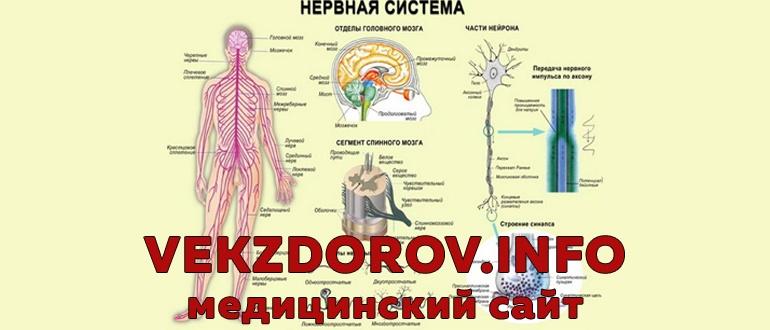 Все об истощении нервной системы: структура, симптомы, лечение и профилактика