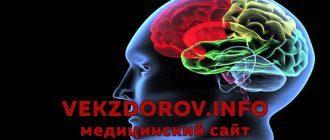 К чему может привести асимметрия желудочков и полушарий головного мозга