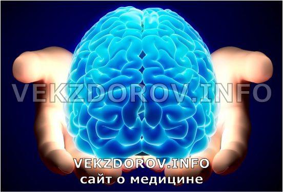 вид головного мозга человека
